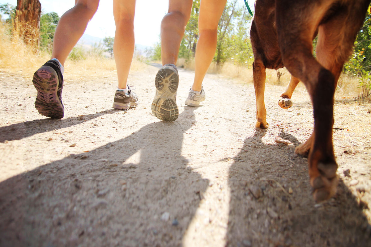 Walking, can it really help you lose weight?