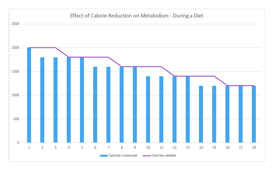 Effect of Calorie Reduction on Metabolism